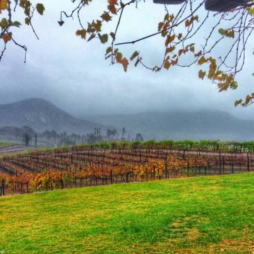 What Does Heavy Rain Mean For A Vineyard?