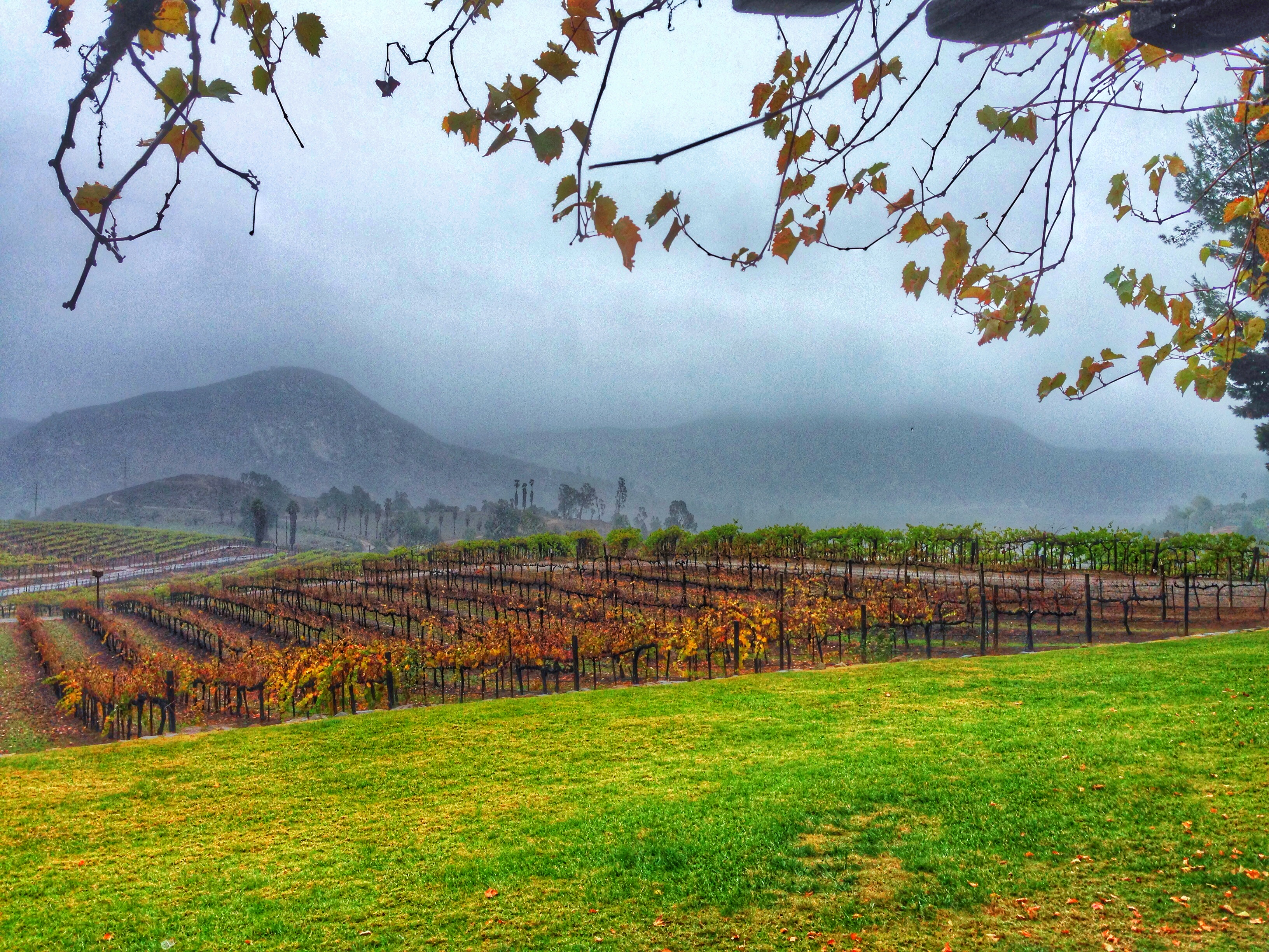 What Does Heavy Rain Mean For A Vineyard Orfila Vineyards Winery