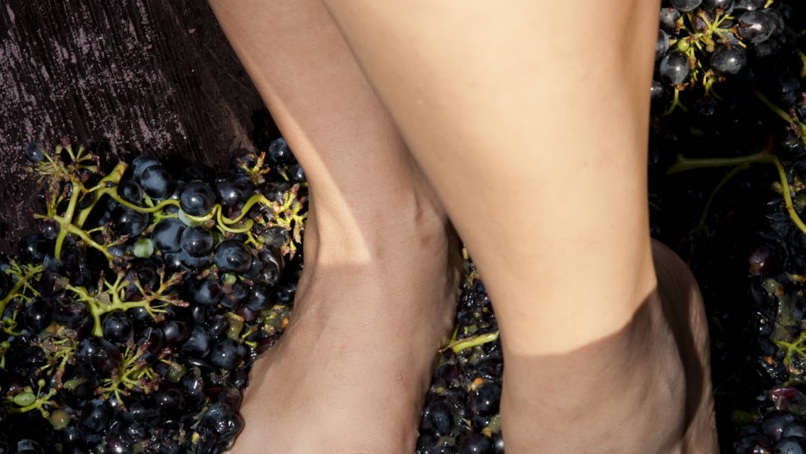 The health benefits of a Grape Stomp
