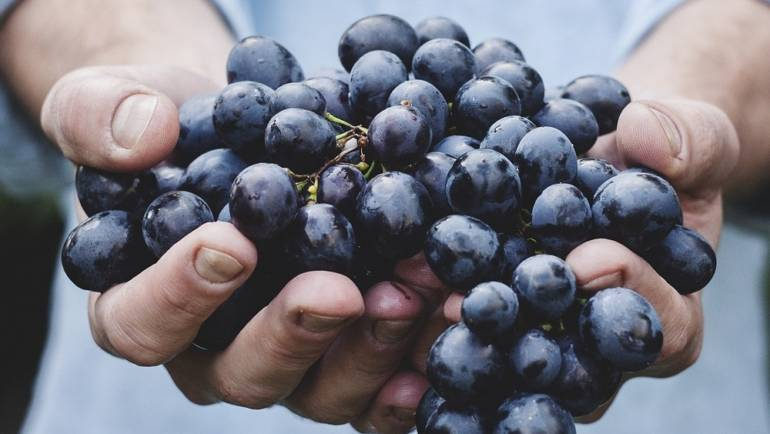 5 Health Benefits of Wine Backed By Research