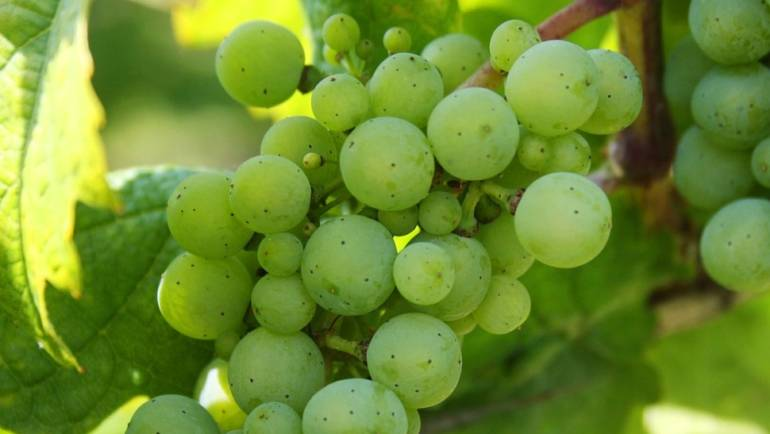 A Few Vineyards We Source Our Fruit From
